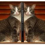 CreativePhotography.com/Cat_Bookends